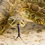Long Read of the Day: Snakebit