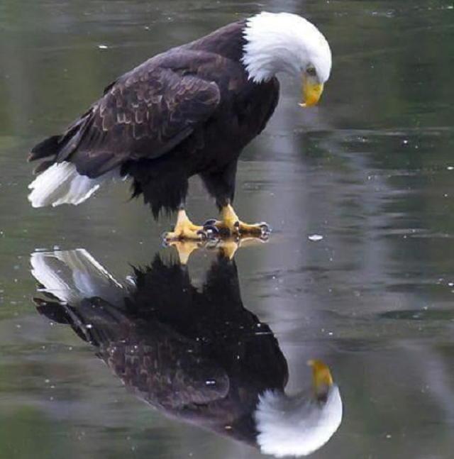 american_reflection