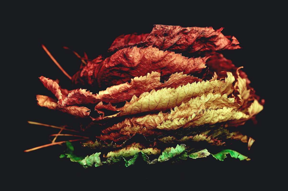 autumn-sandwich-various-colored-leaves-stacked-davide-ragusa