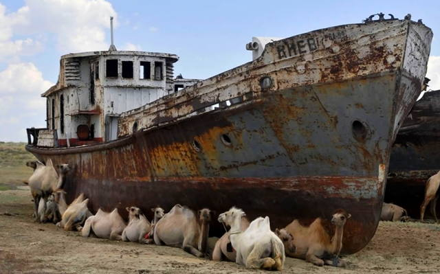 Shipwreck-surrounded-by-camels-in-the-desert.jpg