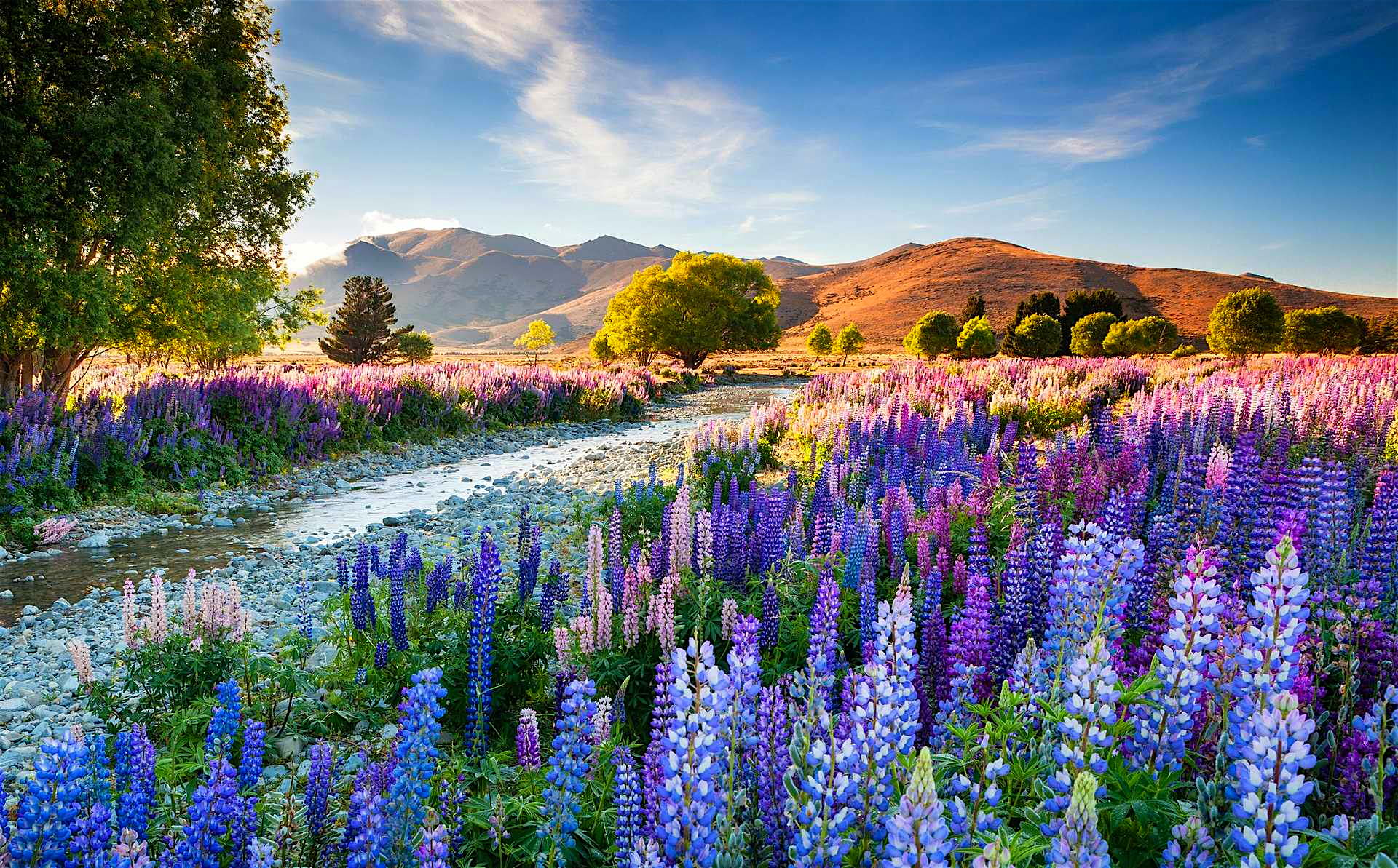 The-overall-winning-entry-was-of-Tekapo-lupins-taken-by-Richard-Bloom.jpg