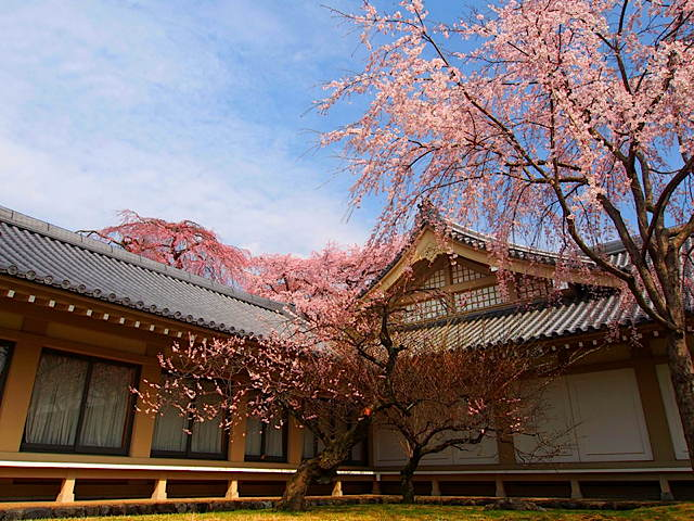 a_cherry-blossoms-daigoji-temple-kyoto-japan-2014.jpg