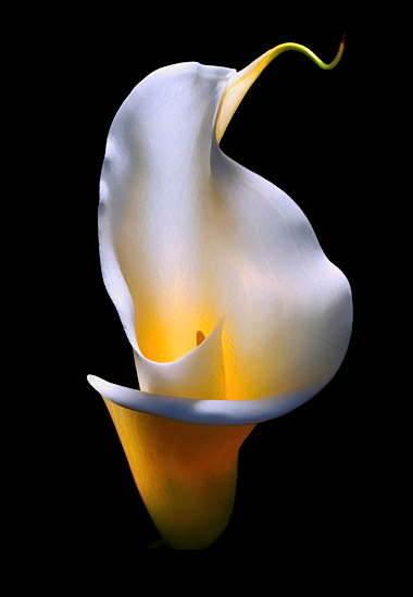 a_flowercup.jpg