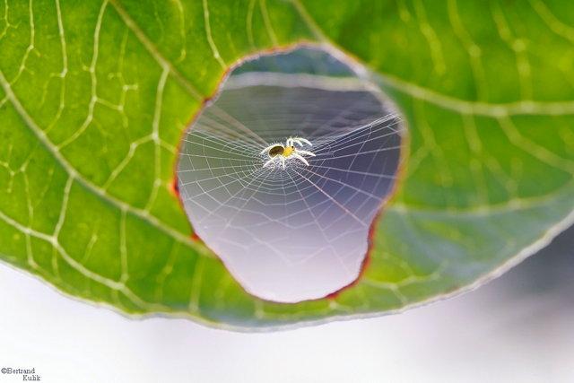 a_spiderbottom.jpg