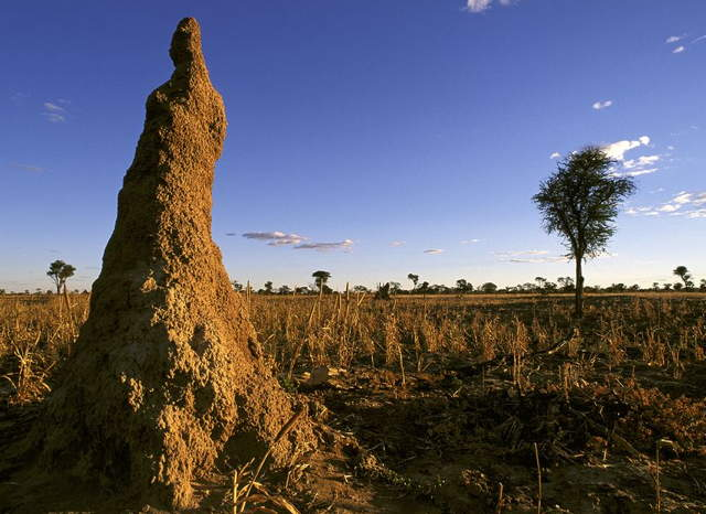 a_termite_mound.jpg