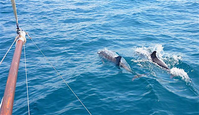 aa_dolphins.jpg