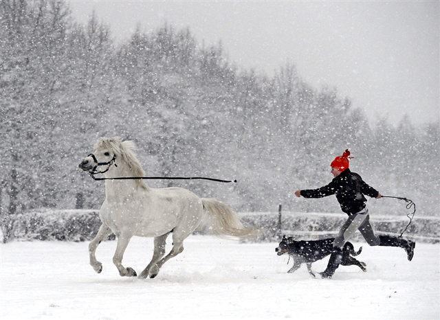 aadog-pony-mn-145p.jpg