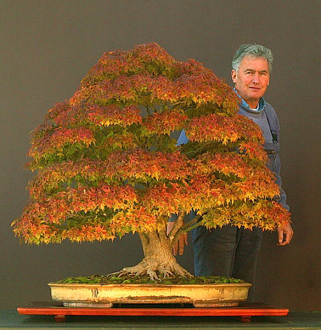 bonsai-japanese-maple.jpg