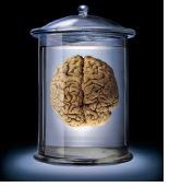 braininjar.jpg