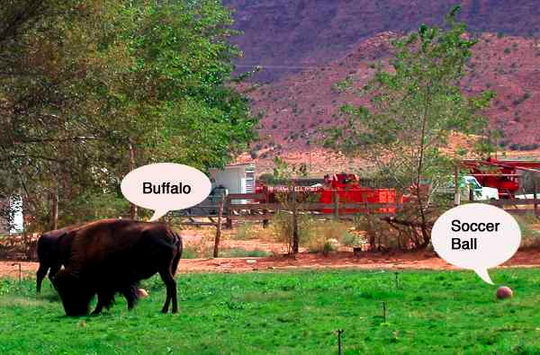 buffalow.jpg