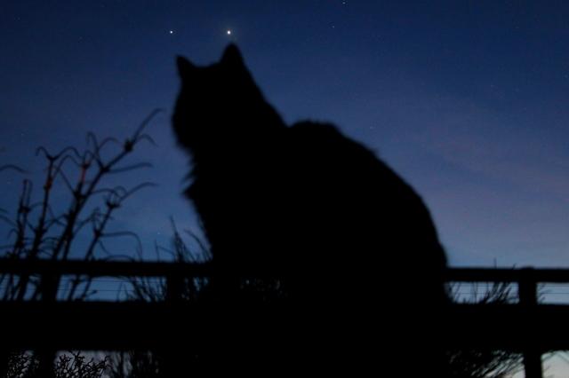 catsears.jpg