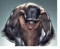 chimper2.jpg