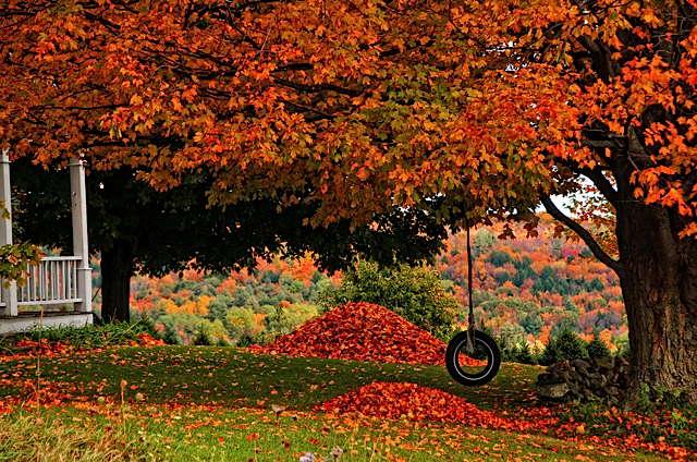 fall_in_full_swing._-_imgur.jpg