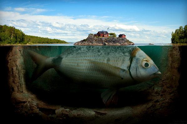 fishyisland.jpg