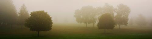 foggyheader.jpg