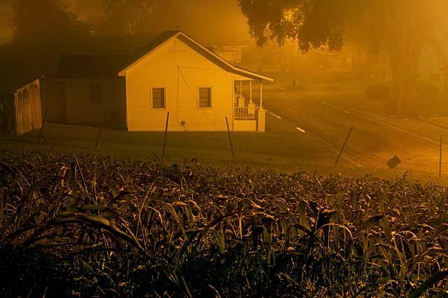 frank_relle_nightshade_corn.jpg