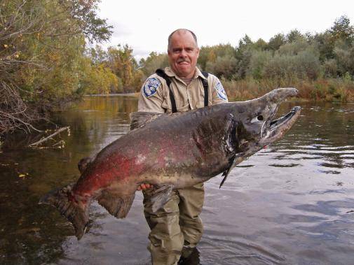 giant%20chinook%20salmon%20battlecreek.jpg