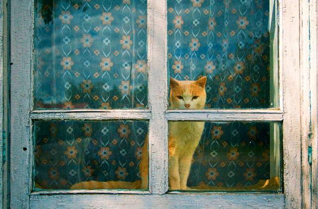 gingercat.jpg