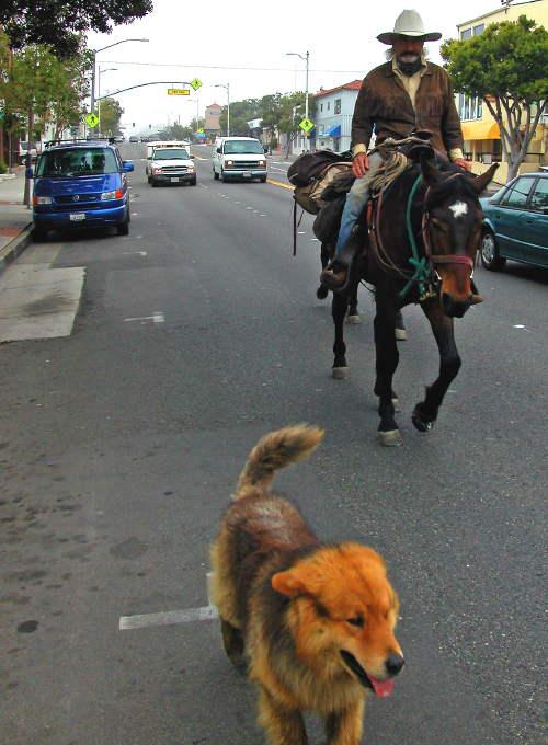 horsemananddog.jpg