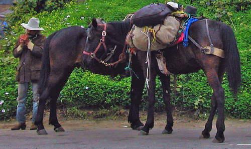 horsemansmoke.jpg