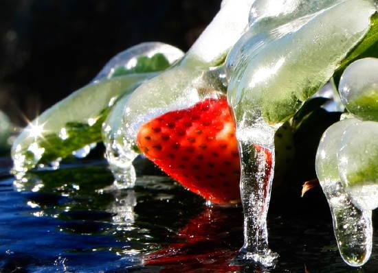 icegreatperish.jpg