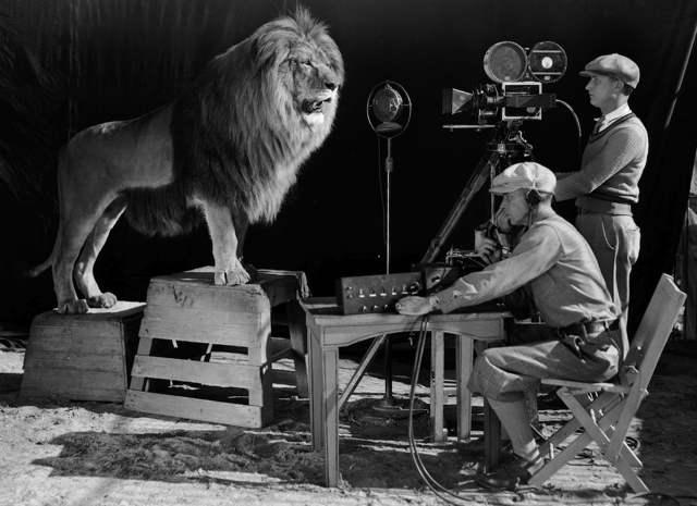 mgm-lion-5.jpg