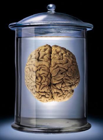 brainjar.jpg
