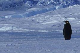 penguinalone.jpg