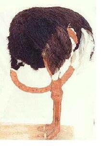 ostrichheadass.jpg