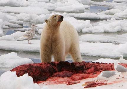 polar-beardining.jpg