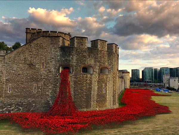 poppies-8.jpg
