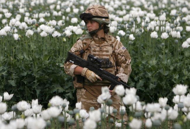 poppy_field_in_musa_qala__helmand_province.jpg