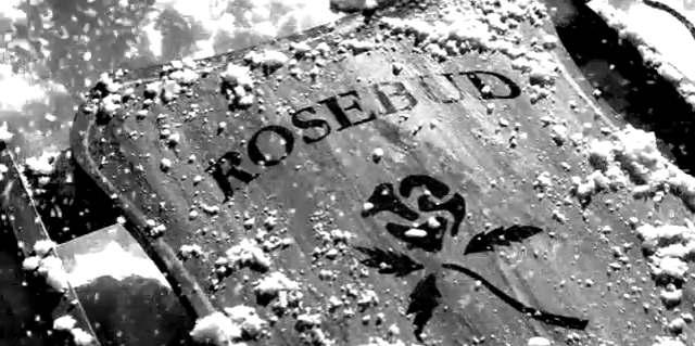 rosebud-.jpg