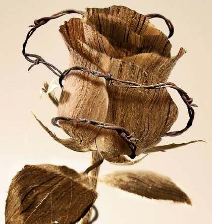 rosethorn.jpg