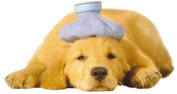 sick_puppy-600x319.jpg