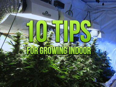 10-tips-for-growing-indoor.jpg