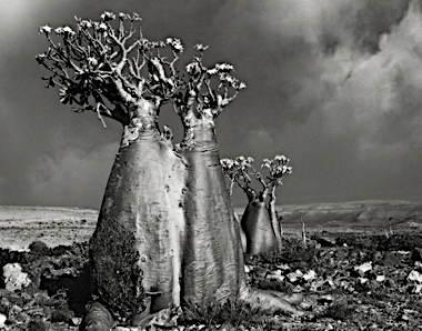 Desert-Rose-Wadi-Fa-Lang-copy.jpg