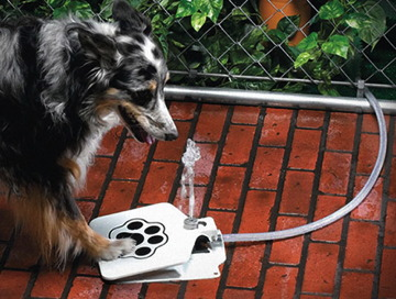 Doggie-Fountain.jpg
