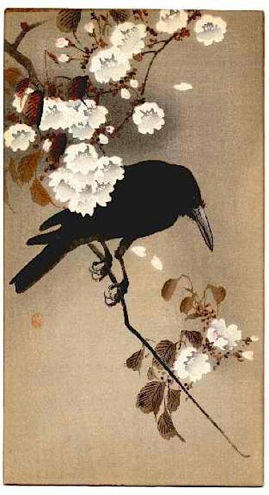 a_a.crow2.jpg