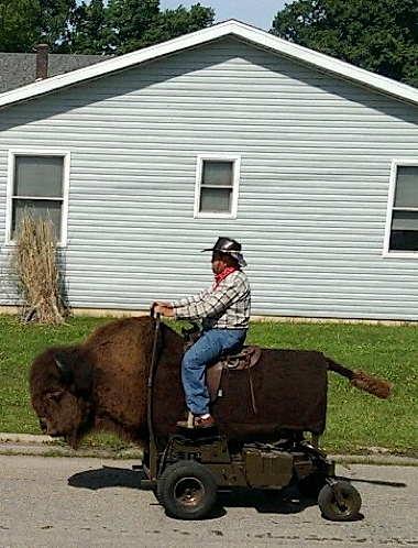 a_buffalo_roam.jpg