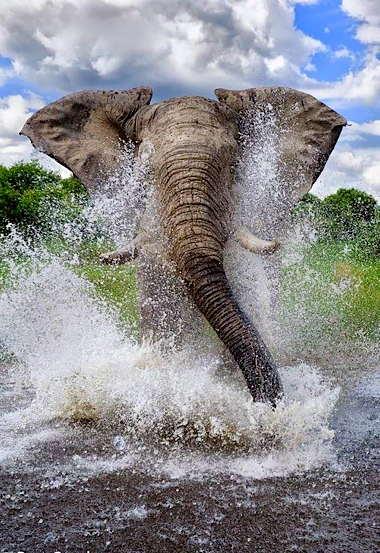 a_elehantsplashing.jpg