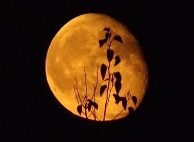 a_moon.jpg
