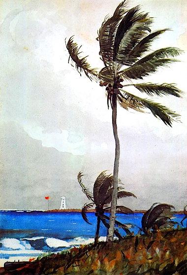 a_palm_tree__nassau_winslow_homer1898.jpg