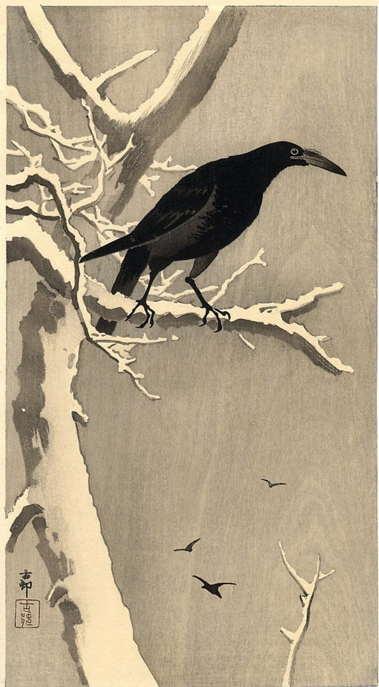 a_raven.jpg