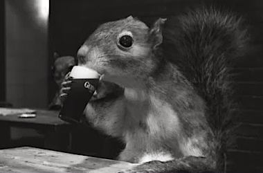 a_squirrel_and_his_guinness_draught4_thumb.jpg