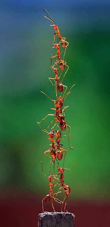 a_teamwork.jpg