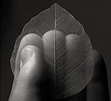 aa_samy_al_olabi_hand_leaf.jpg