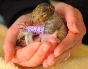 aaat-120308-baby-squirrel-cast-6a.jpg