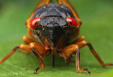 abigbug.jpg