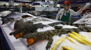 alligator6-300x165.jpg